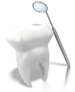 dentist new port richey