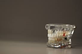 Dentist Wesley Chapel